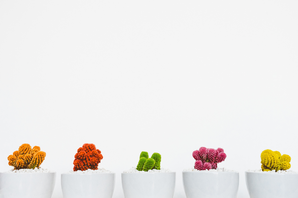 A row of different colored plants