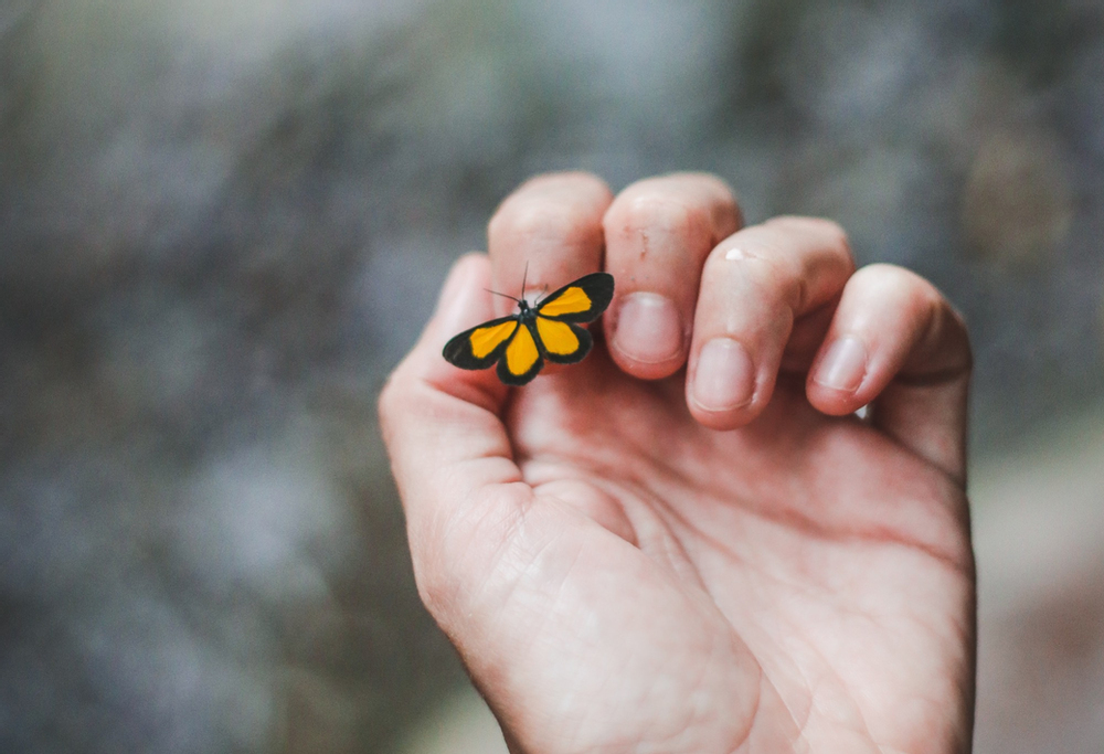 A miniature butterfly landing on someone's hand