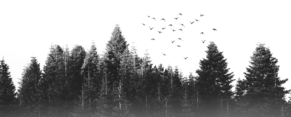 Birds flying away from the forest